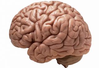 Manusia hanya memanfaatkan sekitar 10% kemampuan otak, Fakta atau Mitos?