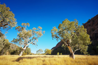 Pic of Australian Outback landscape with sparse trees and greenery