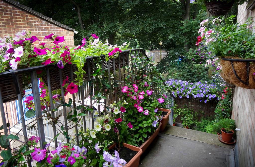 Aranżacja Ogródka Lub Balkonu W Bloku Fuksje I Inne Kwiaty