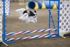 cães fazendo exercícios para cães