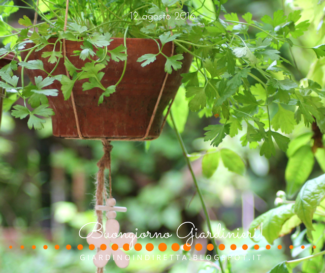 prezzemolo (petroselinum crispum) - il giardino dalla A alla Z -  i fiori della settimana - un giardino in diretta