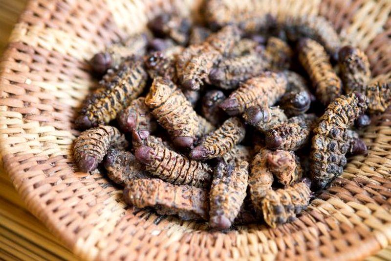 Ulat Mopane (detik.com)