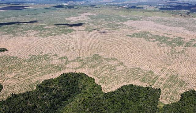 foto penggundulan hutan yang terjadi di Amerika Latin akibat pembalakan liar
