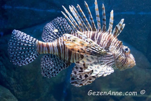 Turkuazoo'daki ilginç balıklar, Forum İstanbul AVM