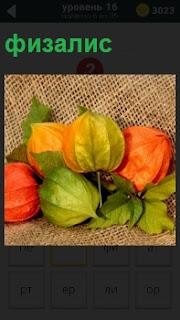 На рогожке лежат яркие разноцветные фонарики физалис  с листочками зеленого и пожелтевшего цвета