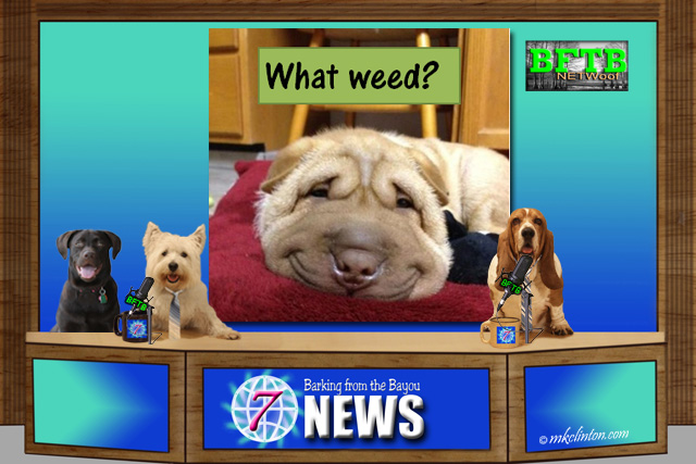 Funny dog smiling on What weed? meme