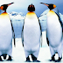 Fakta : Penguin ada lutut