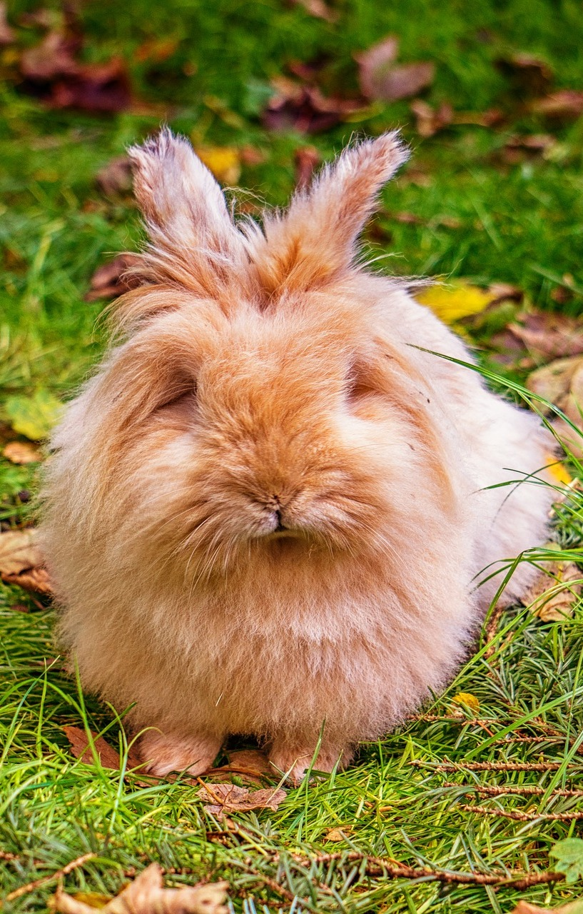 A cute fluffy rabbit.