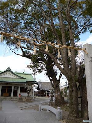 野里住吉神社ご神木
