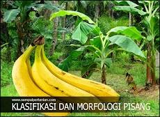 Klasifikasi dan Morfologi Pisang (Musa parasidica)