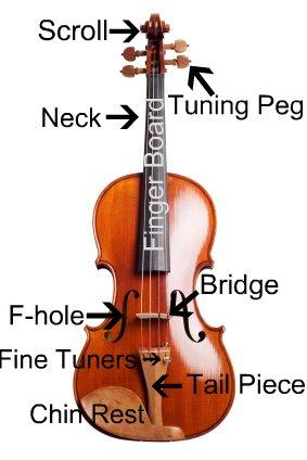 iStock_000002451588XSmall Violin Schematics on violin components, violin symbol, violin neck measurements, violin illustration, violin drawing,