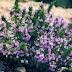 Αυτό είναι το πιο θαυματουργό φυτό για την υγεία – Δείτε τα οφέλη του