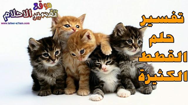 تفسير حلم رؤية القطط في المنام سواء قطط سوداء او بيضاء