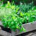 Como crear un huerto en casa en solo 5 pasos