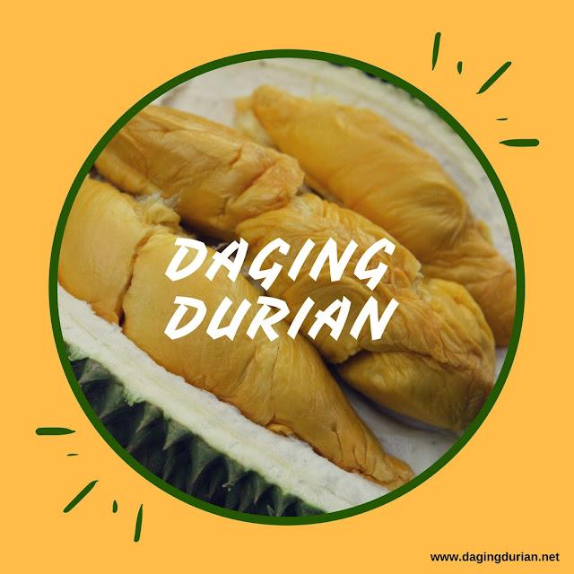 produsen-daging-durian-medan-frozen-di_22