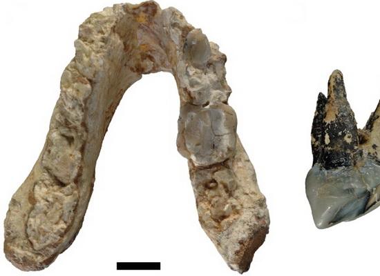 Laporan Penelitian Graecopithecus dari Eropa Sebagai Hominid Paling Awal