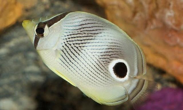sensasi berpetualang bawah laut di jakarta aquarium indonesia