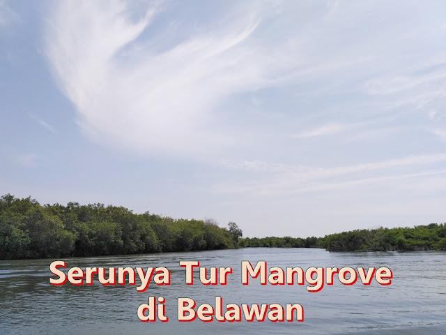 serunya tur mangrove di belawan