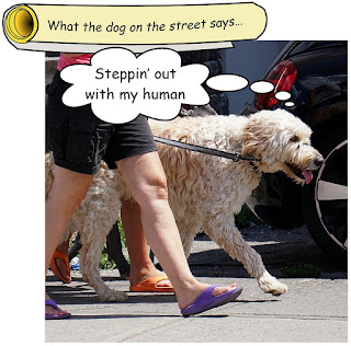 http://dogsarefun.club/2016/07/26/dog-on-the-street-shows-off-human/