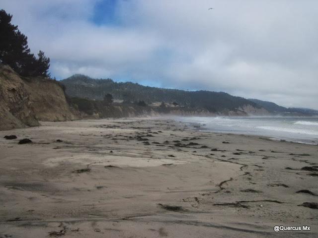 Área donde llegan los elefantes marinos a descansar en el Año Nuevo state Reserve
