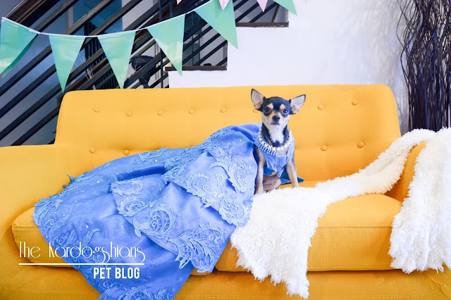 Meet Our Favorite Pet Couturier: Pooch Totty