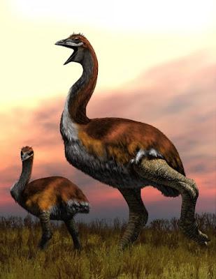 Cientistas descobrem fóssil de maior ave do mundo