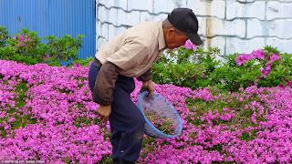 Kuroki cuidando el jardín.