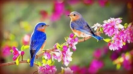 याद के पंछी