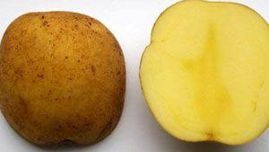 kentang, potato