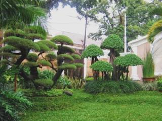 Gambar penataan halaman rumah minimalis