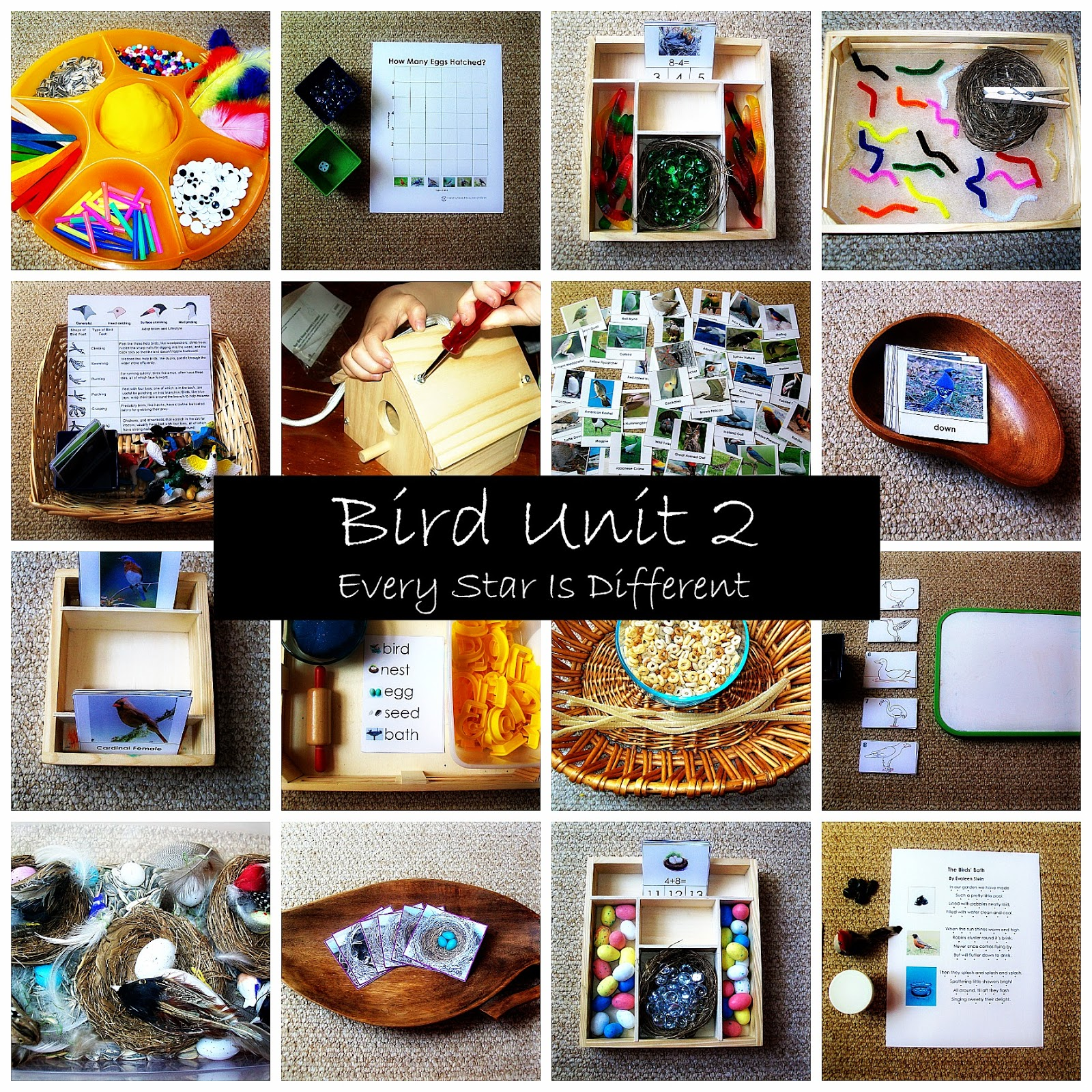 Bird Unit 2 With Free Printables