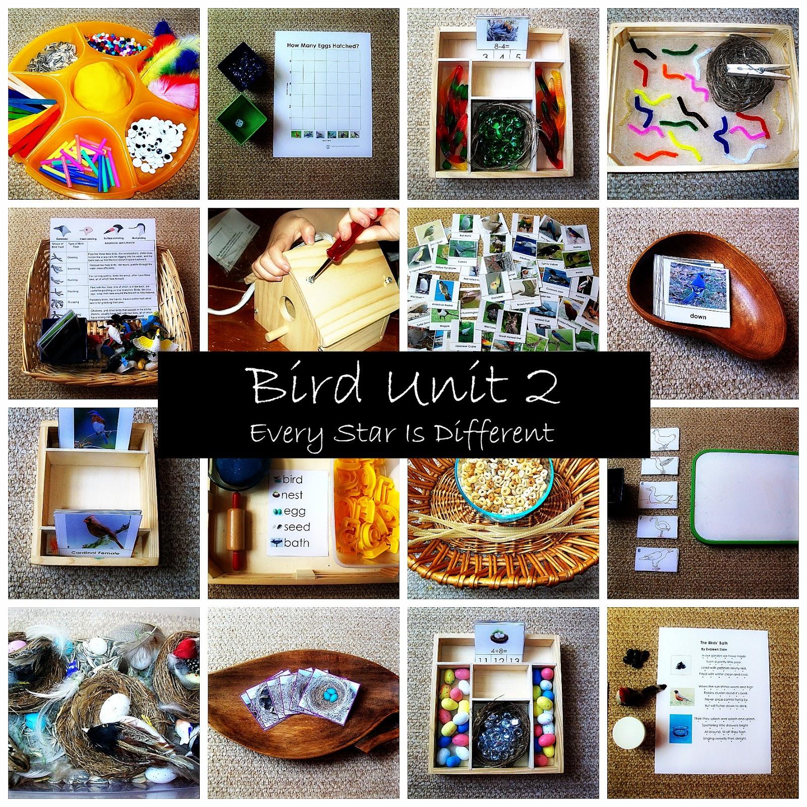 Bird Unit 2