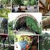 Kebun Binatang Ragunan ~ Wisata Murah Meriah Di Selatan Jakarta