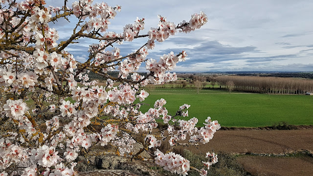 Juzbado, primavera, Juzbado libro abierto del paisaje