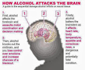 YOUR BRAIN AND ALCOHOL
