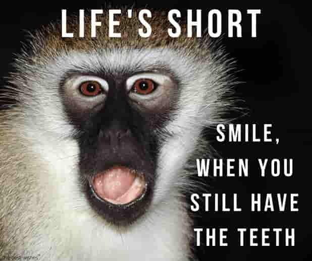 24 Super Funny Good Morning Images with Monkey