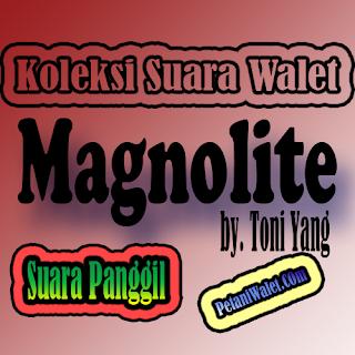 Suara Panggil Magnolite By. Toni Yang