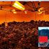 லண்டனில் கஞ்சா செடி வளர்த்த தமிழர்கள்: வீட்டினுள் புகுந்த பொலிசார் மயக்கம்