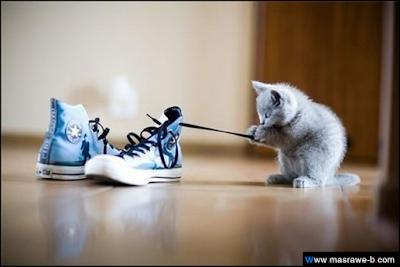 صور صور قطط كيوت 2020 خلفيات قطط جميلة جدا cats30.png