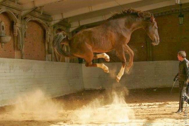 imagenes de caballos saltando sin jinete