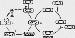 Soal Biologi : Bab Virus (50 Soal Pilihan Ganda (PG) + Kunci Jawaban)