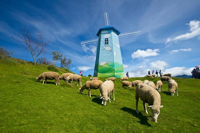 Đàn cừu ở Cingjing