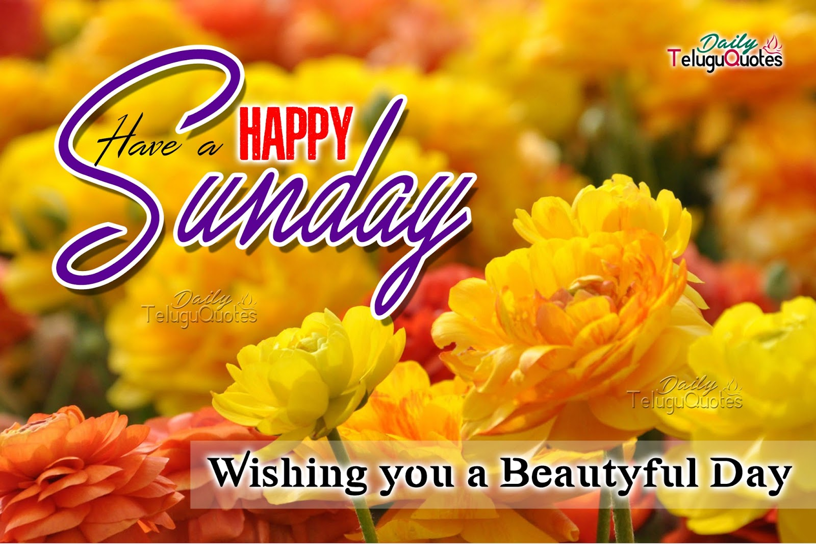 Happy Sunday Wishes Quotes And Sayings With Yellow Flower Stock