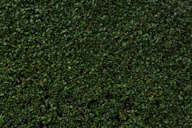 Leafy Hedge Texture