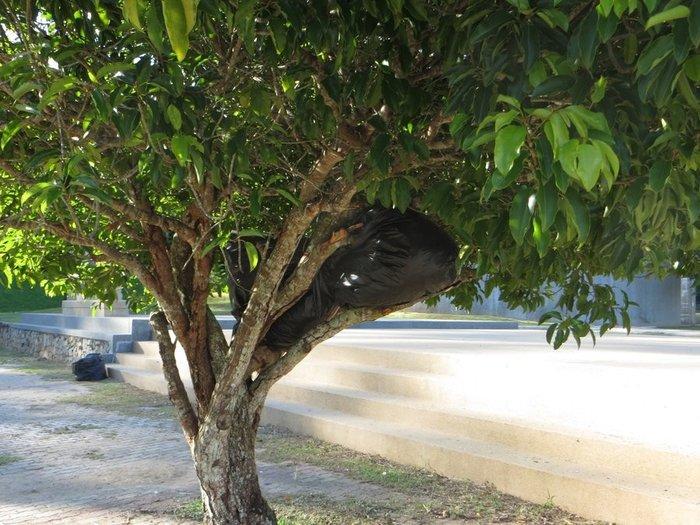 Мусорный мешок на дереве