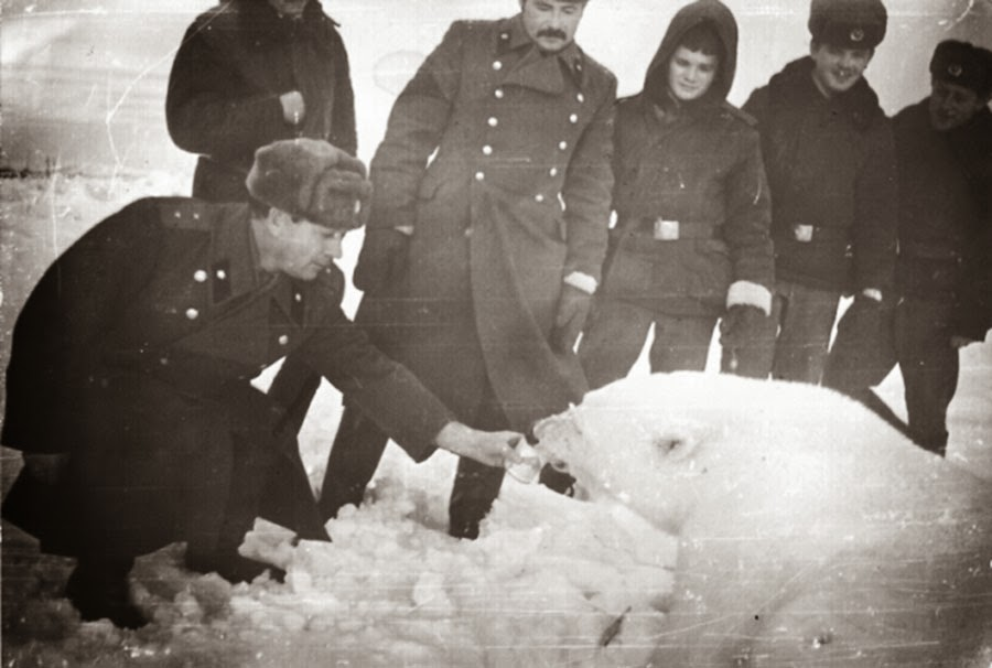 A group of Soviet soldiers feeding a polar bear.
