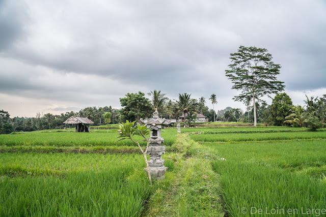 Campuhan - Ubud - Bali
