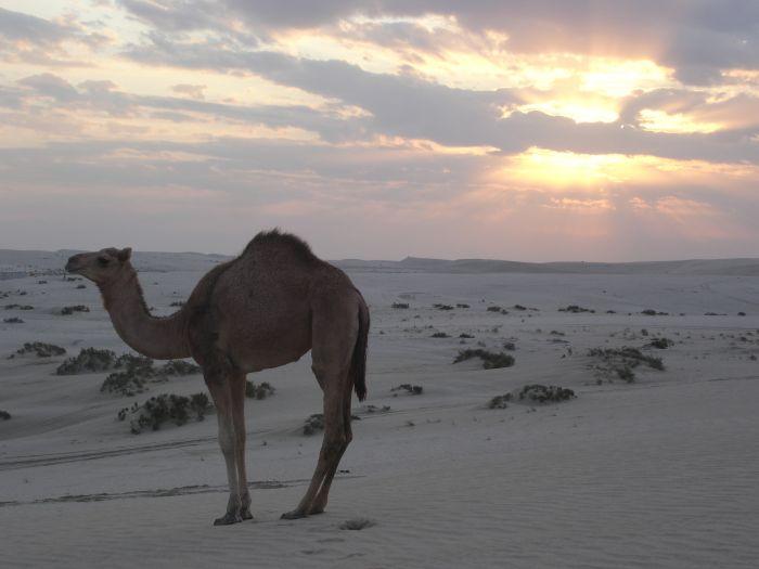Qatar deserto
