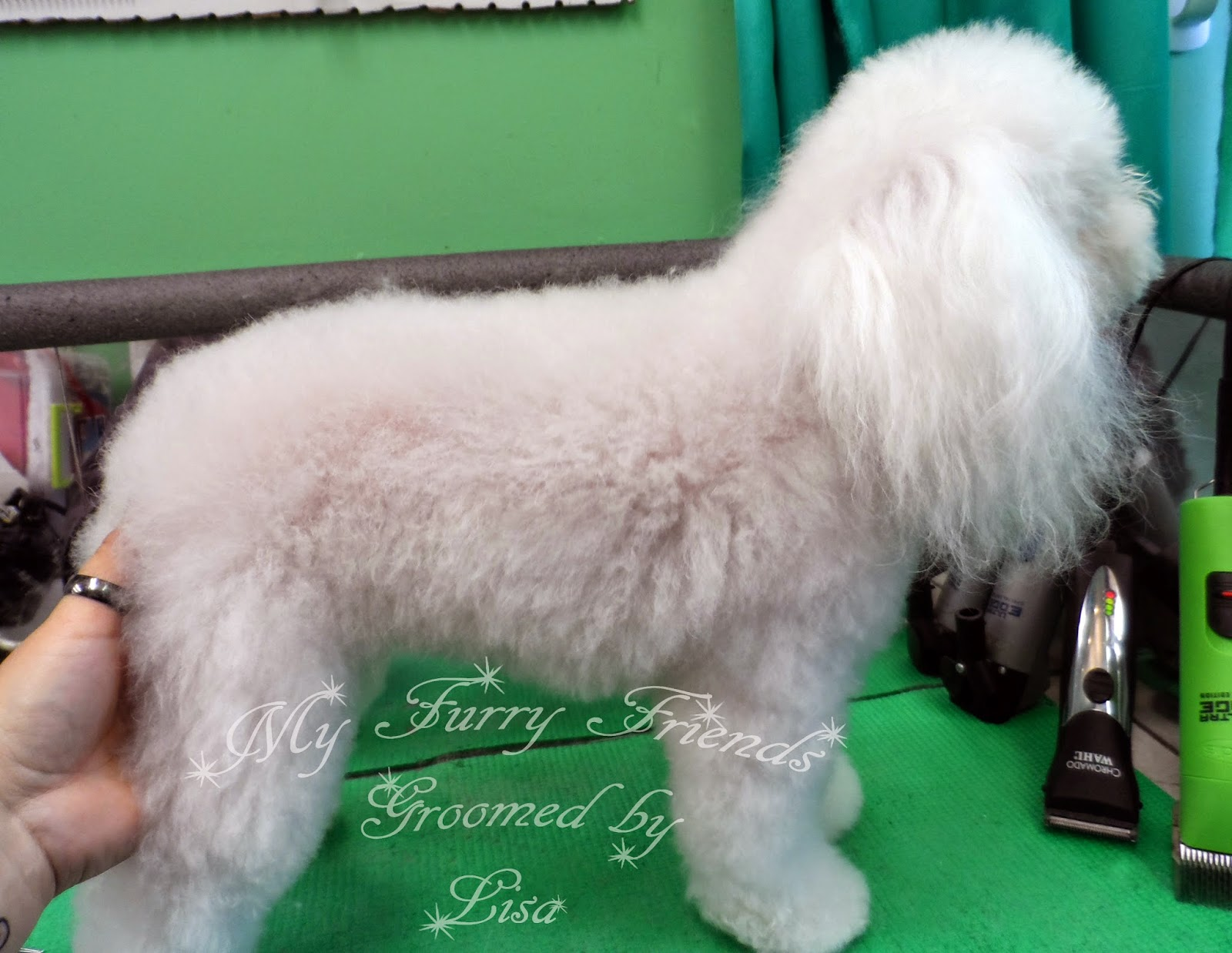 Pet Grooming: The Good, The Bad, & The Furry: Product Review