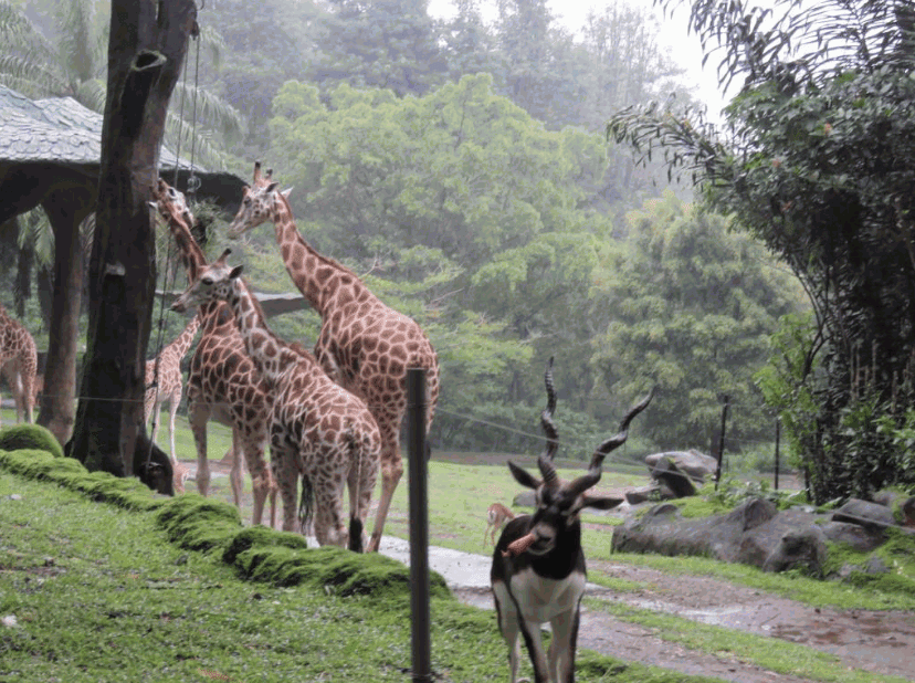 5 Tempat Wisata di Bogor Jawa Barat Yang Wajib Anda Kunjungi